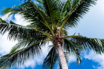 Palm trees and blue sky? Yes please.